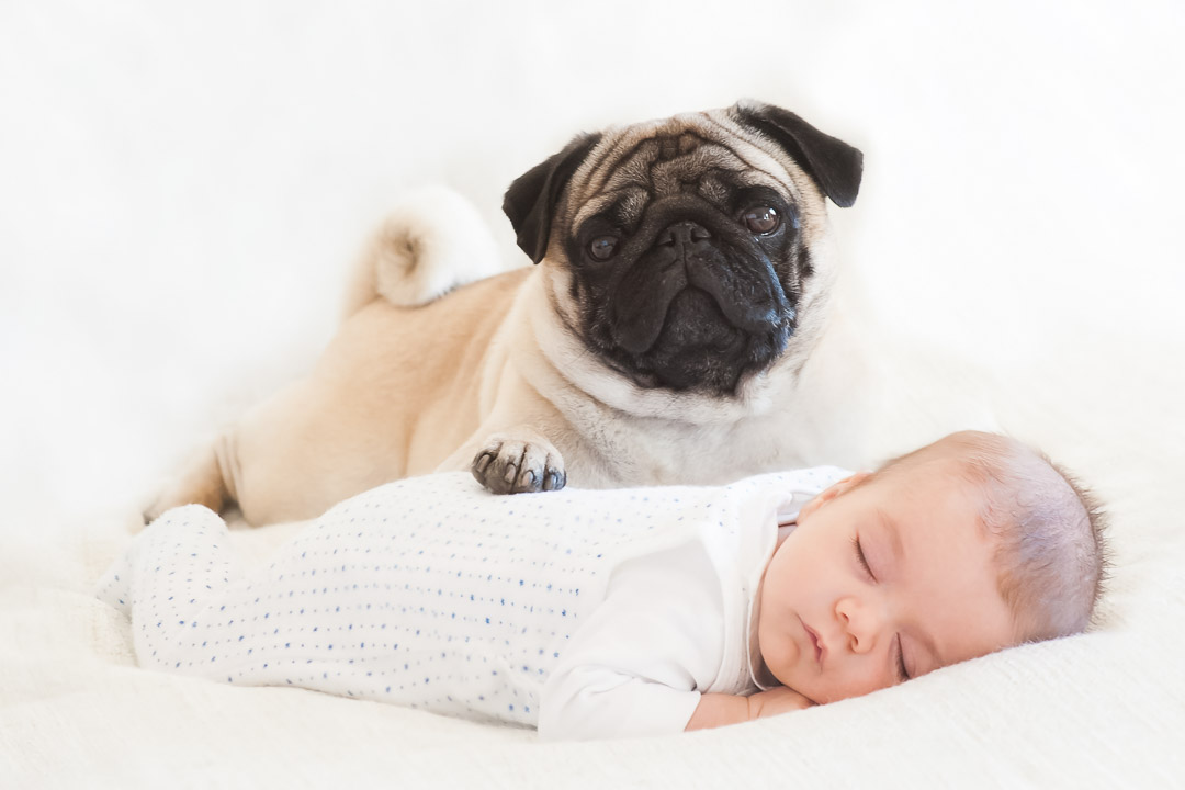 dog and baby at studio newborn photography